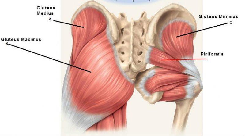 Hip Pain Muscle Versus Joint Bucks Sports Chiropractic Dr Derek